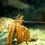 Crab at the Barcelona Aquarium